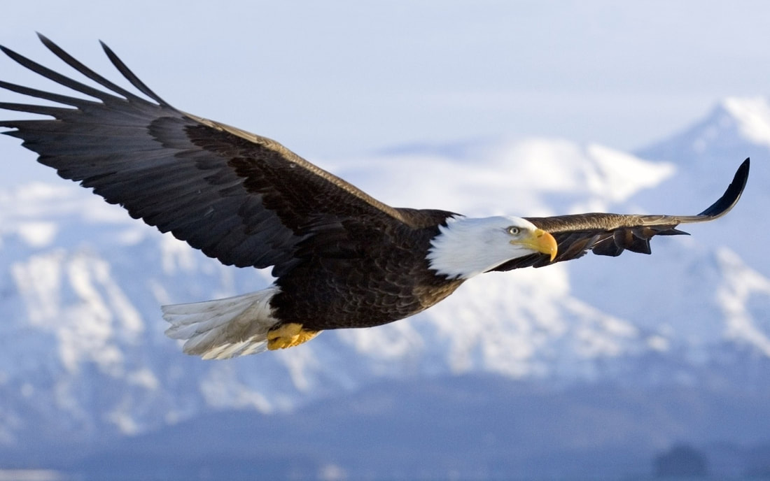 6 Incredibly Valuable Lessons From An Eagle - Carl Vernon